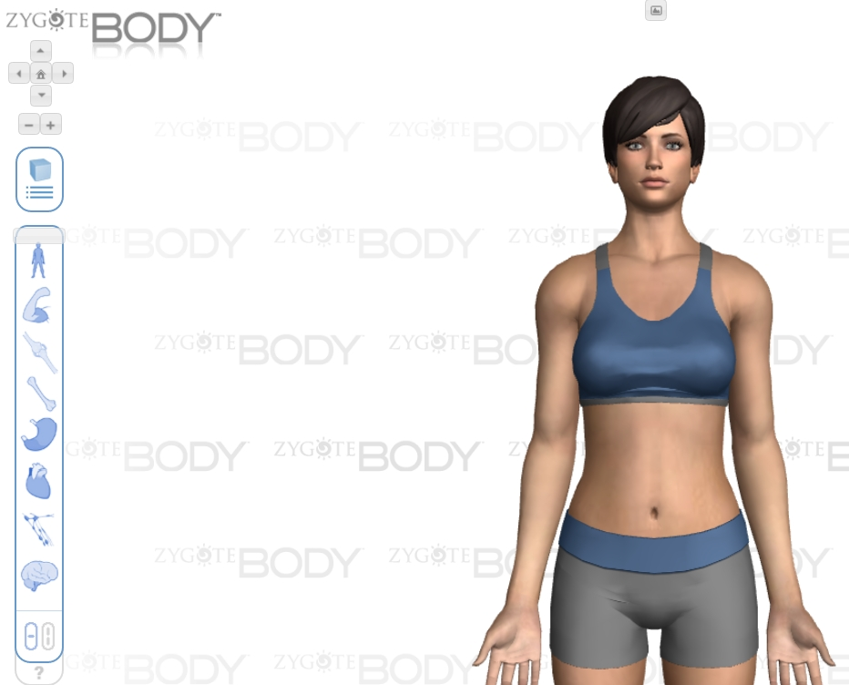 Body Browser 1